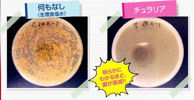 チュラリア・黄色ブドウ球菌