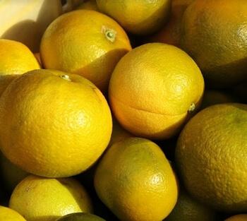 ディープレストミスト・ビターオレンジ
